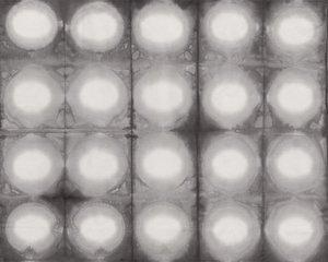 Pollinator Circles LT305-FO4 - Foglight