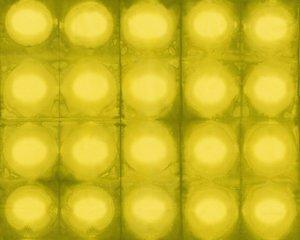 Pollinator Circles LT305-LI3 - Lime Julep