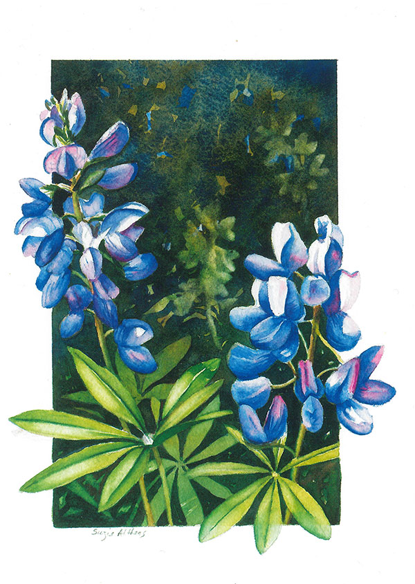 Lupine Blossoms Card