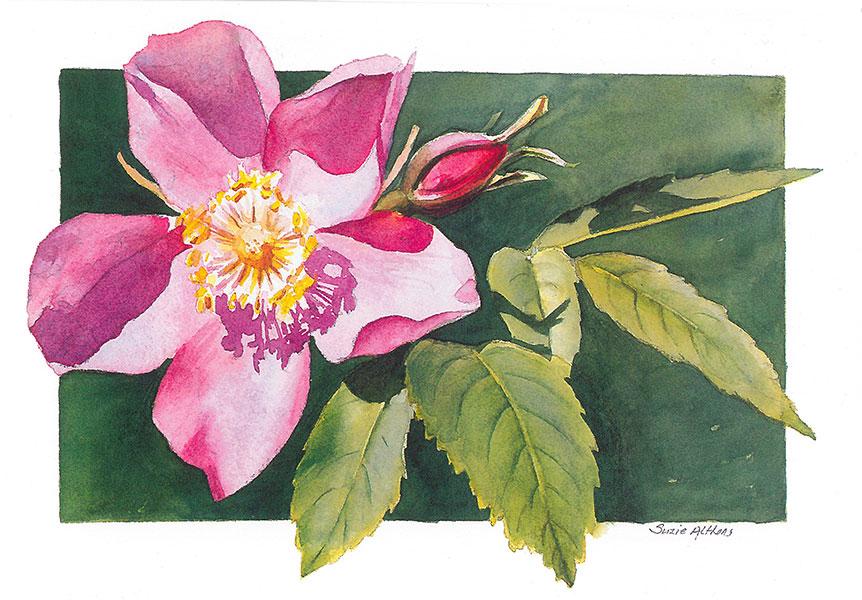 Prickly Rose Card