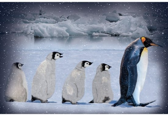Call of the Wild Penguin S4740-621 Arctic Blue Panel
