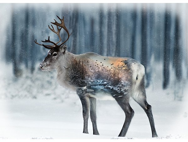 Call of the Wild Caribou Panel T4862-597 December
