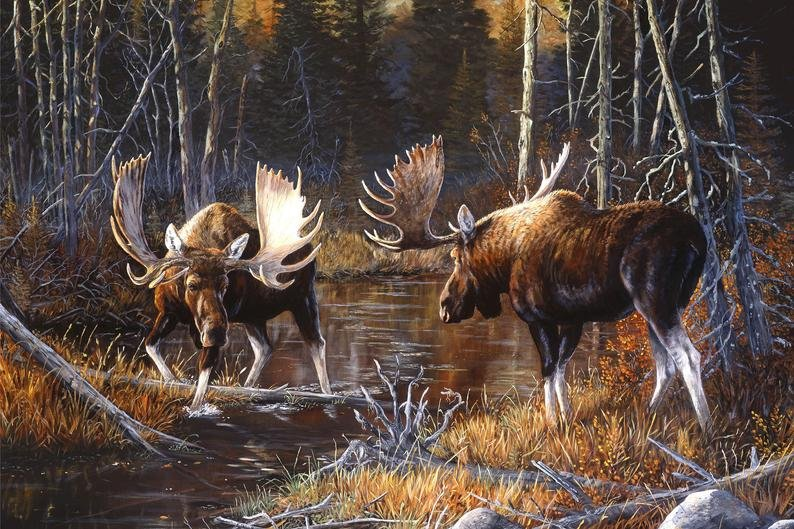 Majestic Moose Digital Panel Northcott DP21825-36  `