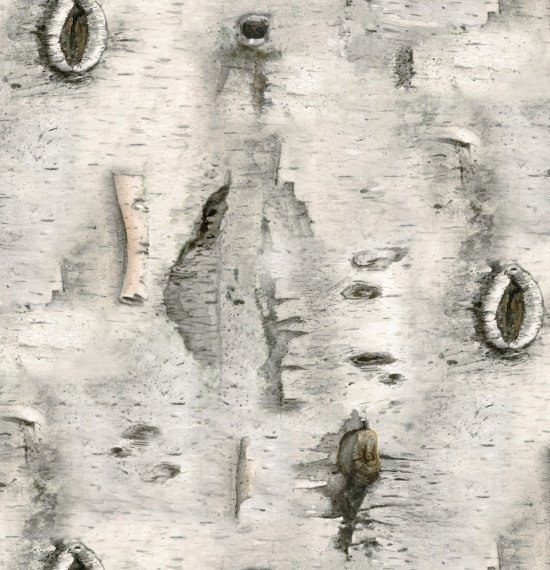 Landscape Medley Gray Birch Bark `