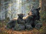 Northcott Mama Bear DP24224-42 Panel 32x43