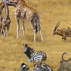 African Animals `