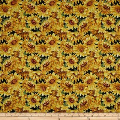 golden harvest sunflower