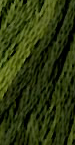 Gentle Art Sampler Thread Green With Envy 0196
