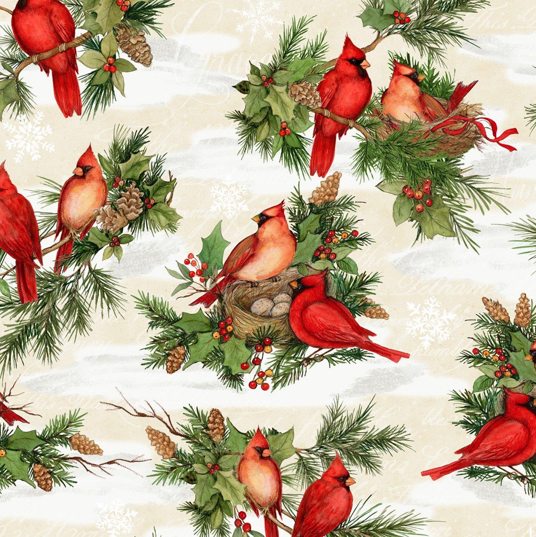 Cardinal Noel Cardinals