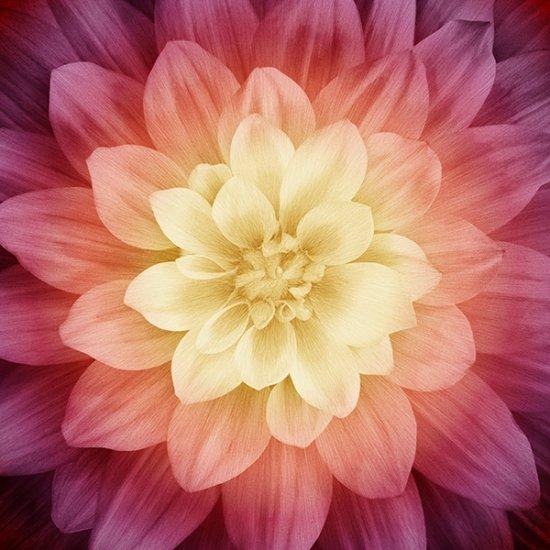 P4389-286-Sugarplum Dream Big by Jeanie Sumrall-Ajero, Hoffman California Fabric