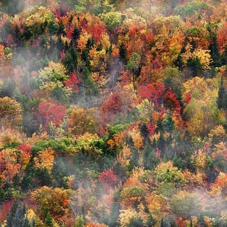 Autumn call of the wild