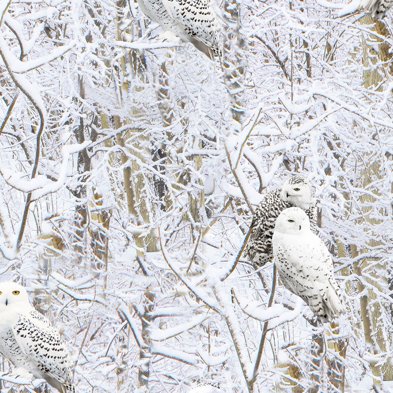 Snowscape Owl