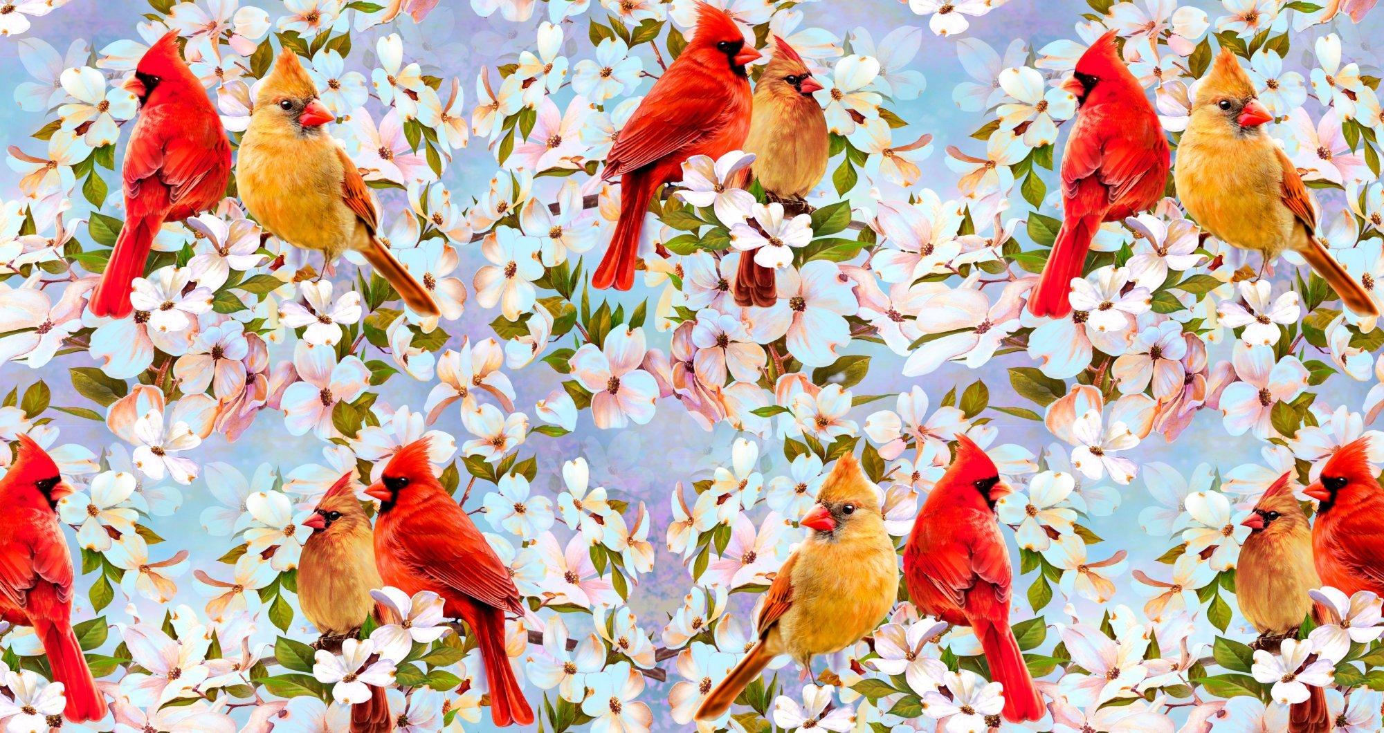 Cardinal Pair & Dogwood Floral 0036