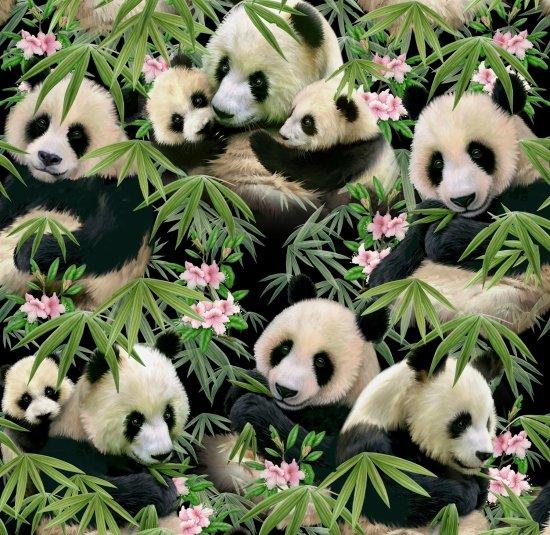 Panda & Bamboo 1230