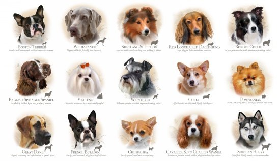 Dog Breeds 1313 Panel - Terrier to Husky