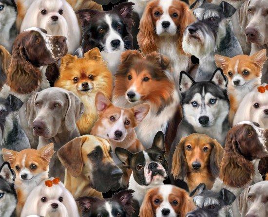 Dog Breeds 1314 Corgi Weimaraner Husky Pomeranian