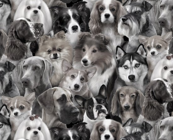 Dog Breeds 1314 Gray