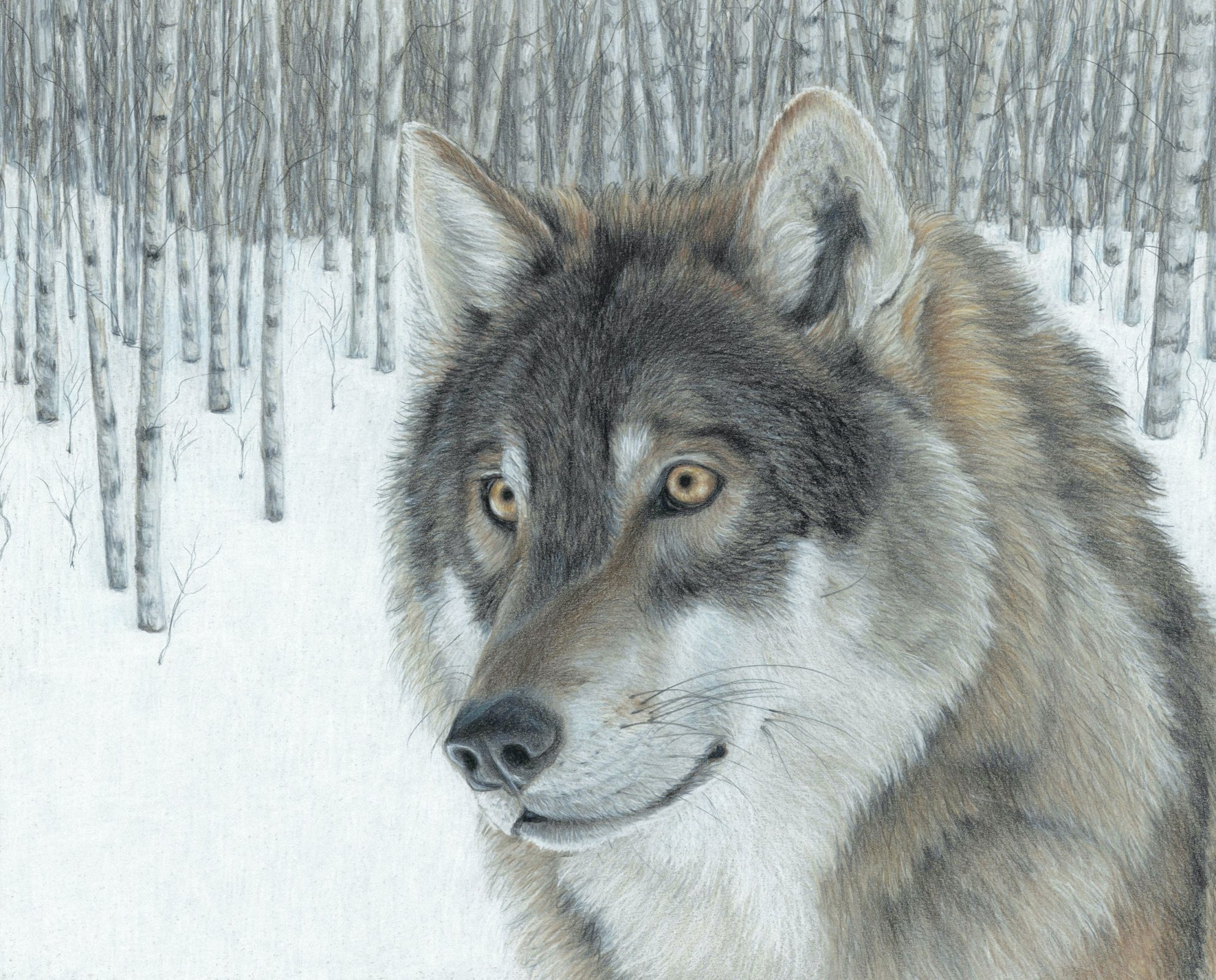 Aspen Wolf 3976 Panel
