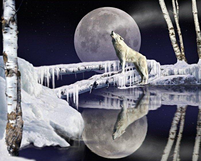 Ice Wolf 4058 Panel