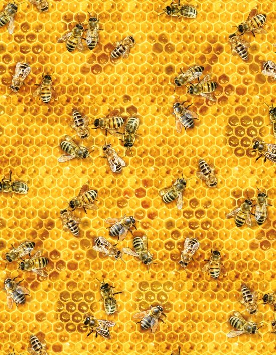 Honey Bees 510