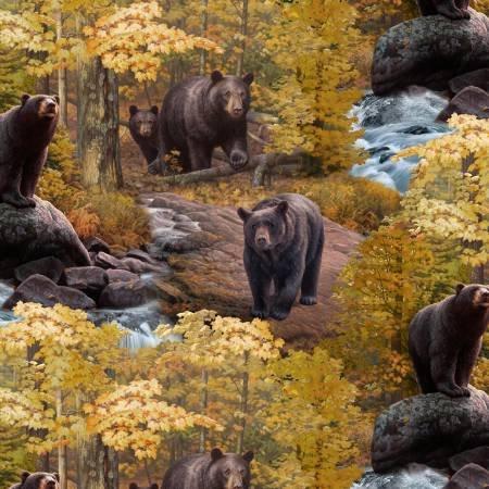 Ursus Americanus 9203 Black Bear Scenic