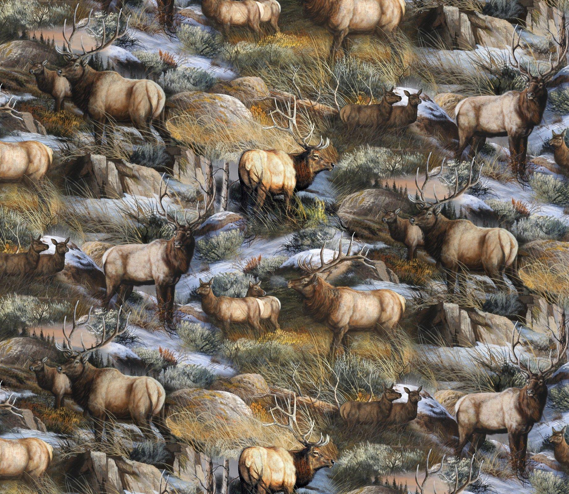 Cool Autumn Elk 3383 Scenic
