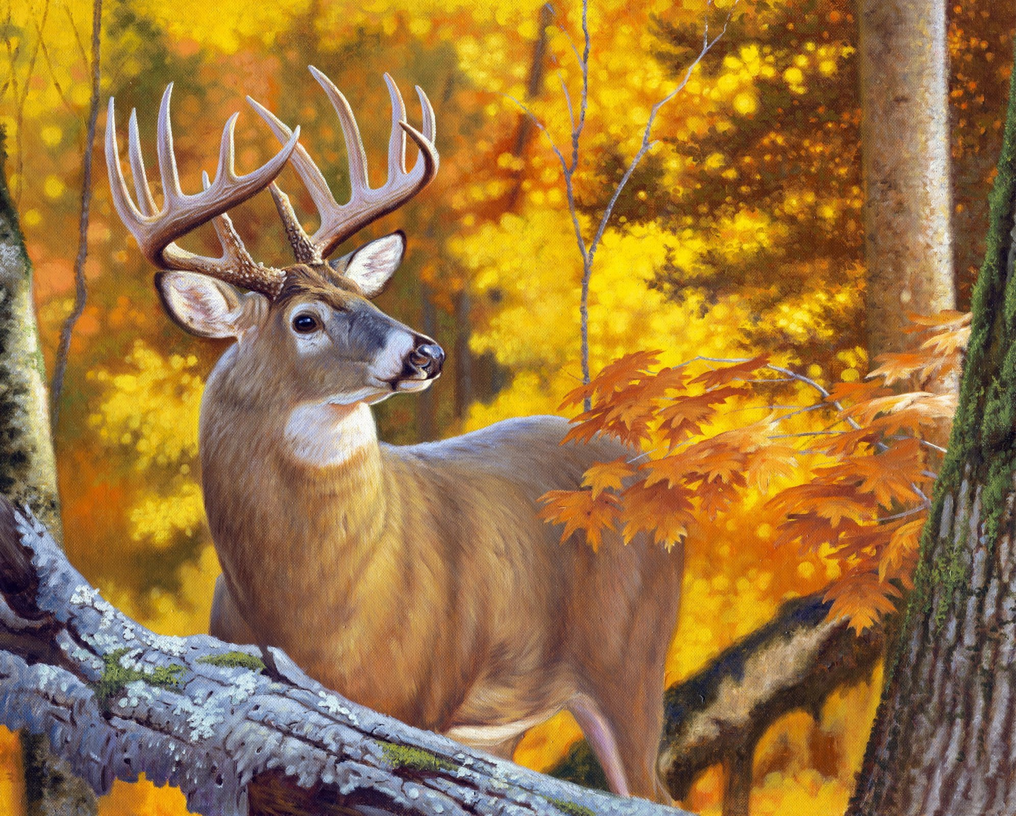 Against the Wind Autumn Deer 4033 Panel