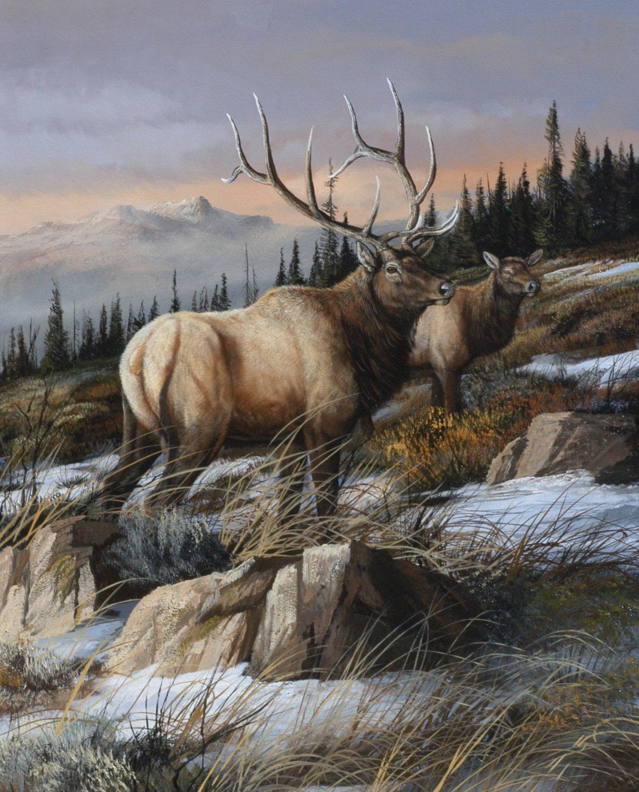 Cool Autumn Elk 4276 Panel 36