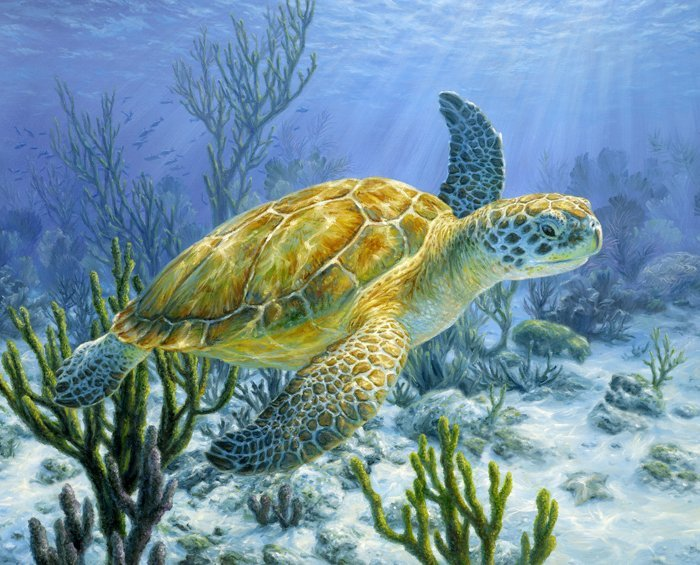 Ancient Mariner Sea Turtle 3466 Panel