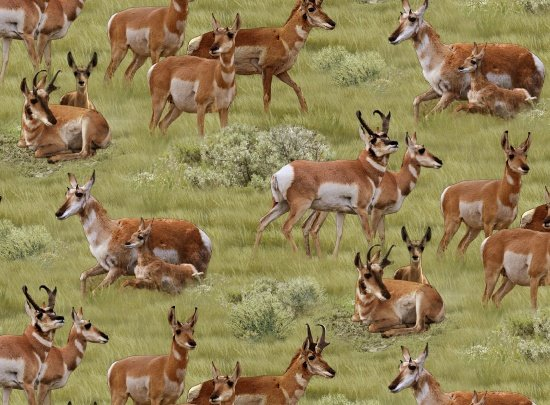 Antelope 504 Scenic