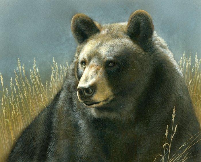 Black Bears 0074 Panel