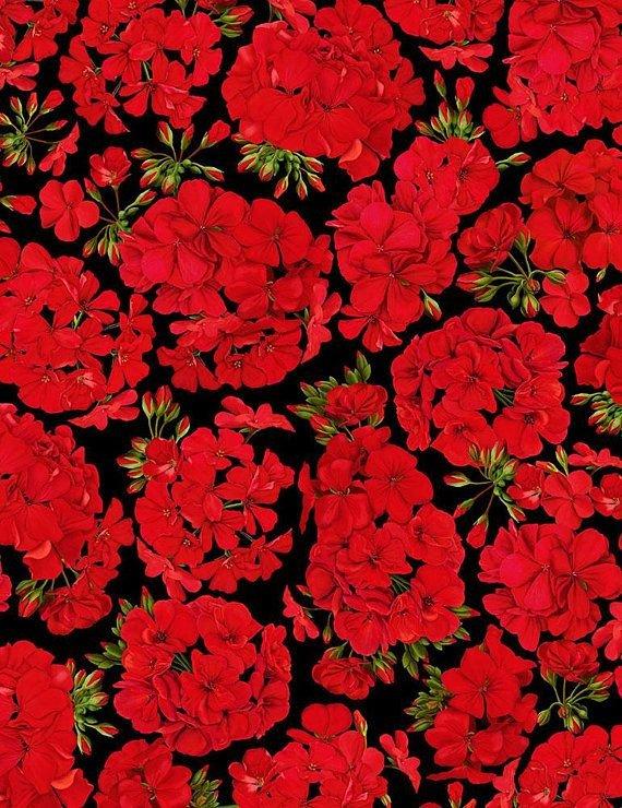 Cardinal Red Geraniums C6380