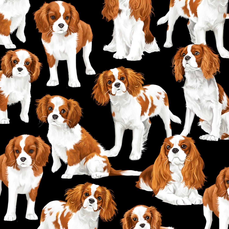 Cavalier King Charles Spaniel Dogs C7366 Black