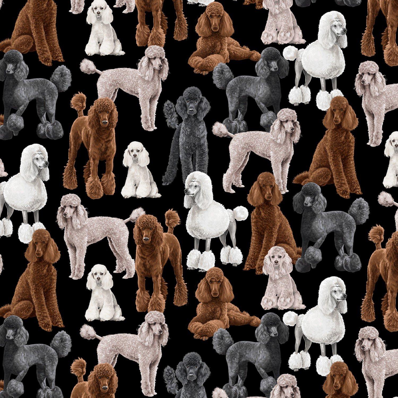 Standard Poodles C7527 Black