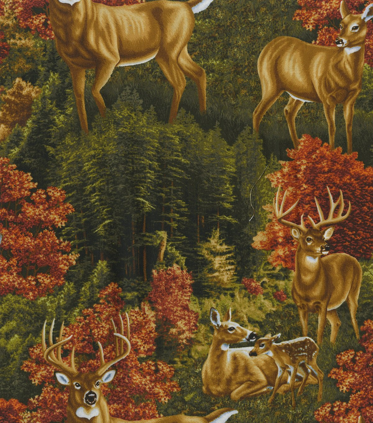 Deer and Fawn in Grass 3867
