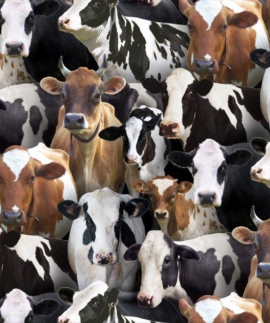 Farm Animals Cows 432 Black