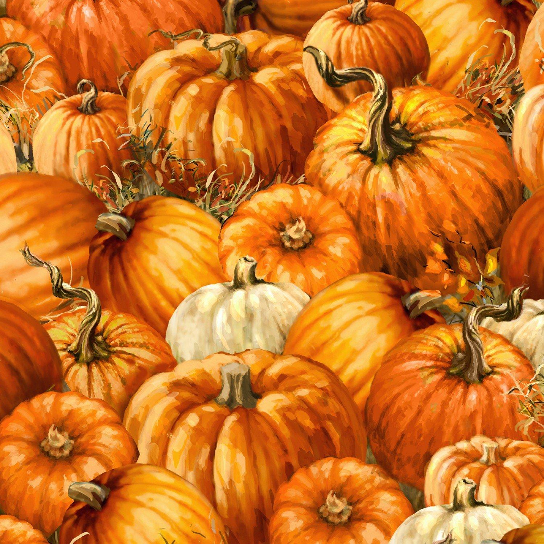 Harvest C7092 Pumpkins