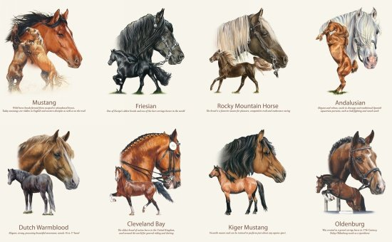 Horse Breed Panel 7600