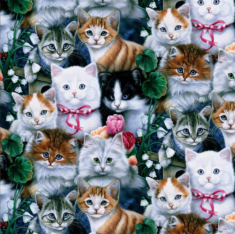 Kitty Cat Kitties 2003 Packed