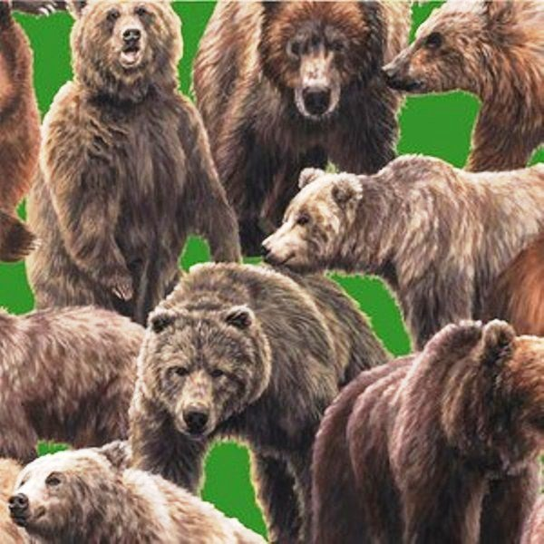 Bear 112-24871 Green