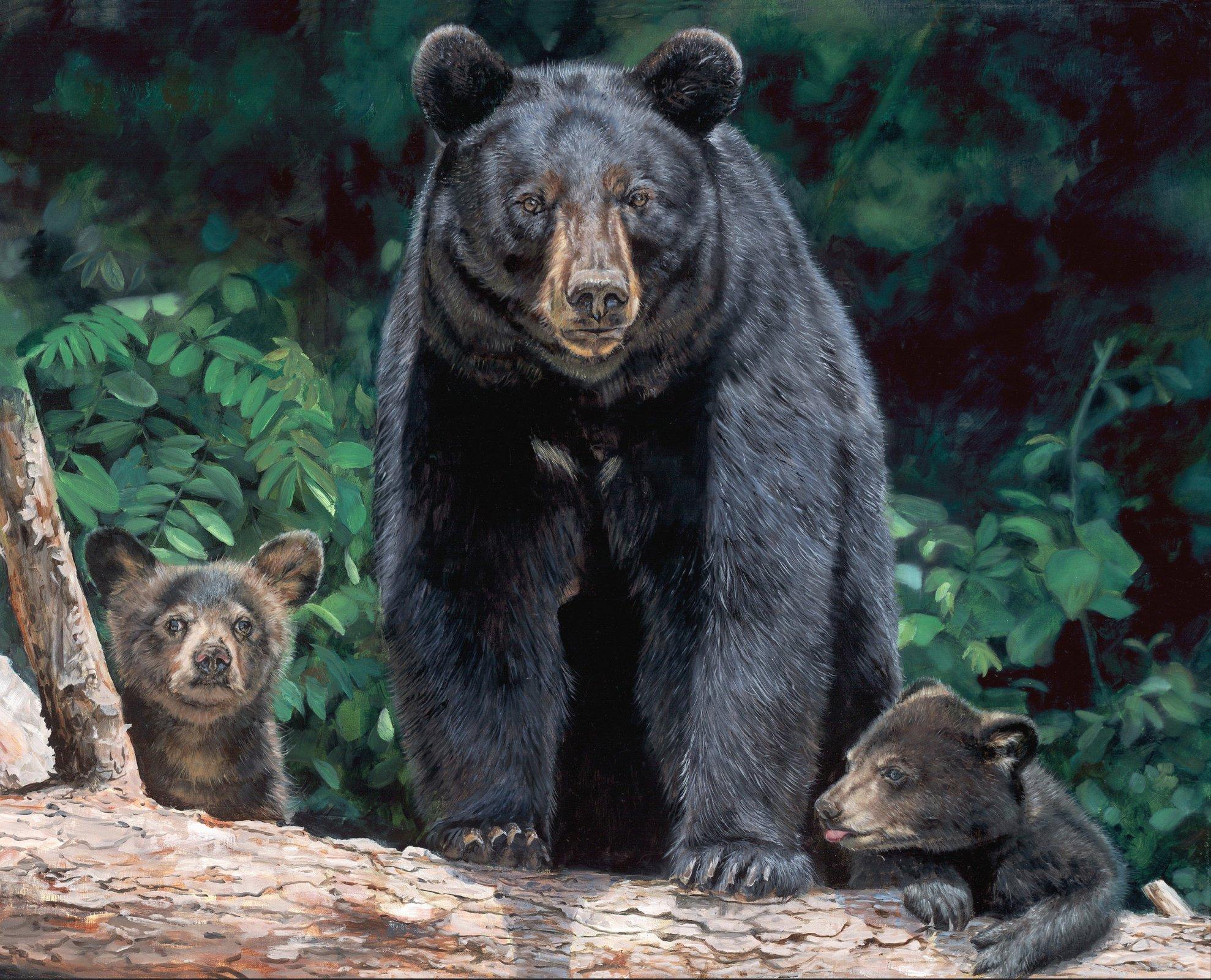 Mama & Bear Cubs 3074 Panel