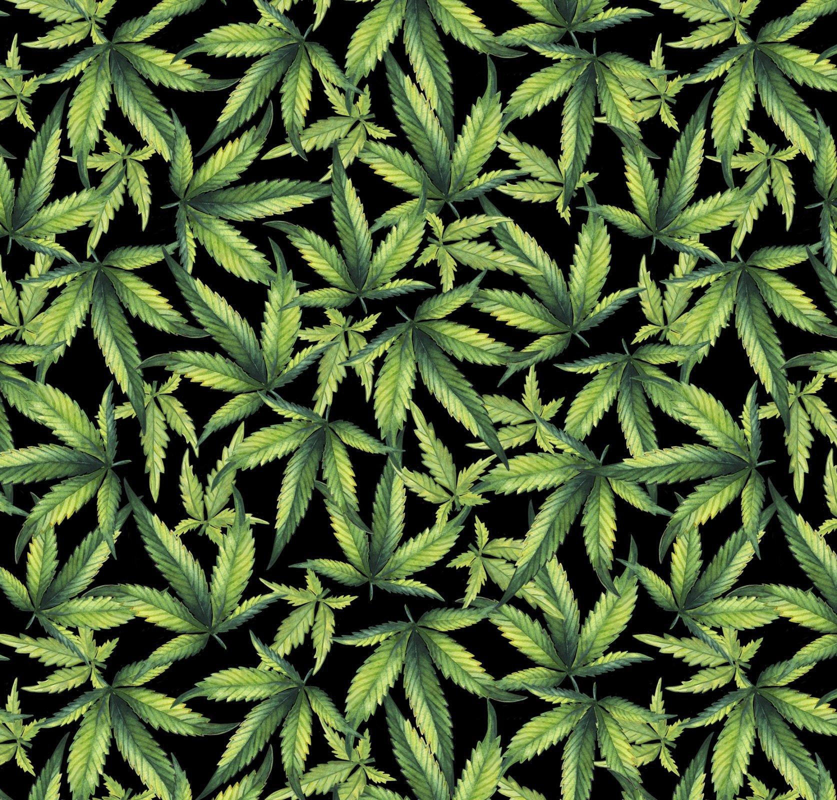 Marijuana Plant 1323 Black Background