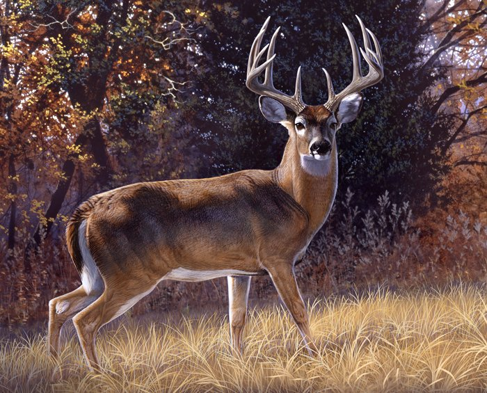 Whitetail Deer 3060 Trophy Buck Panel