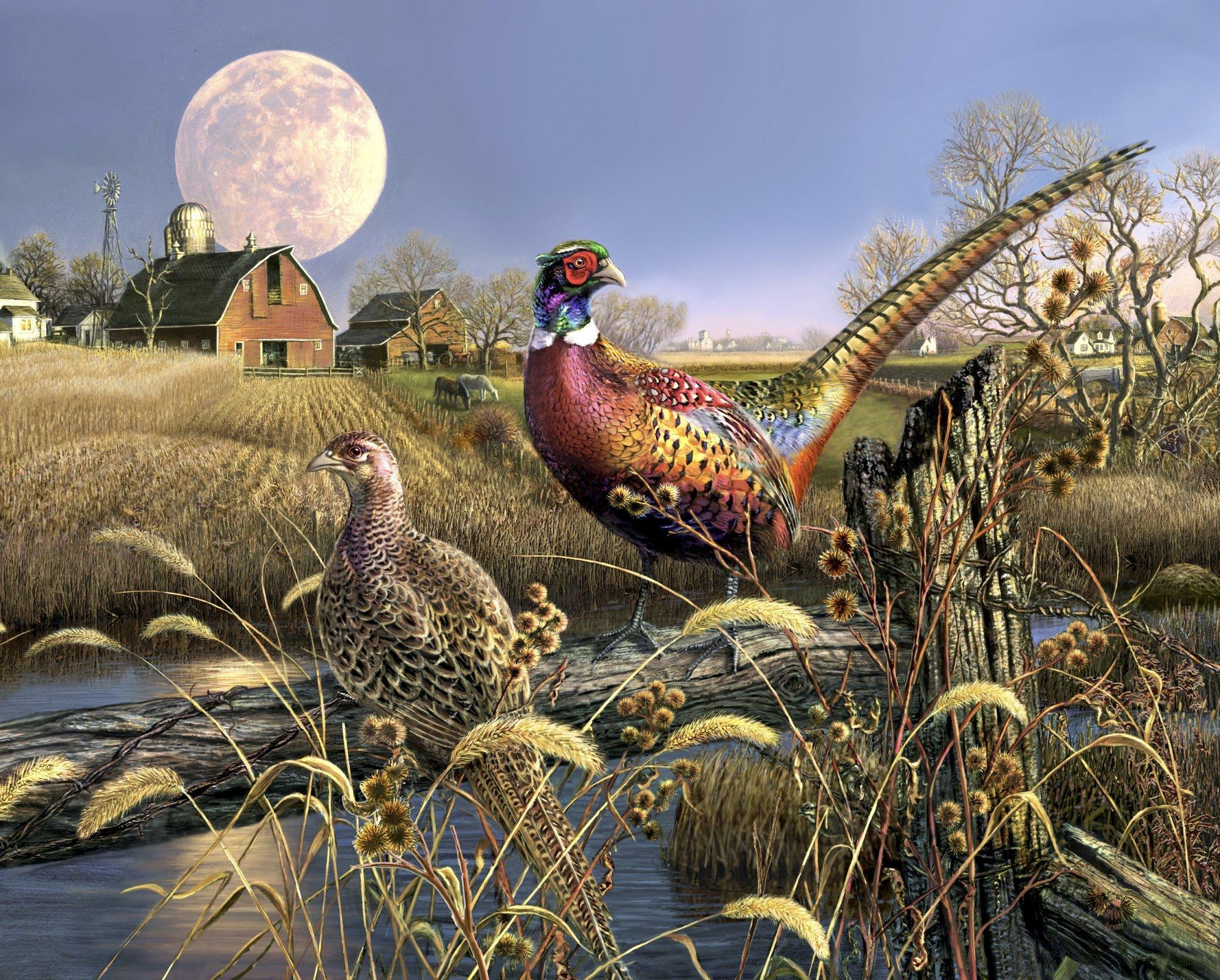 Harvest Moon Pheasants 3197 Panel