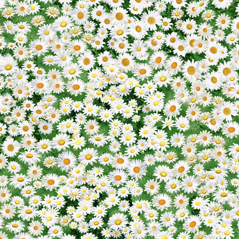 Nature Daisy Field C7471