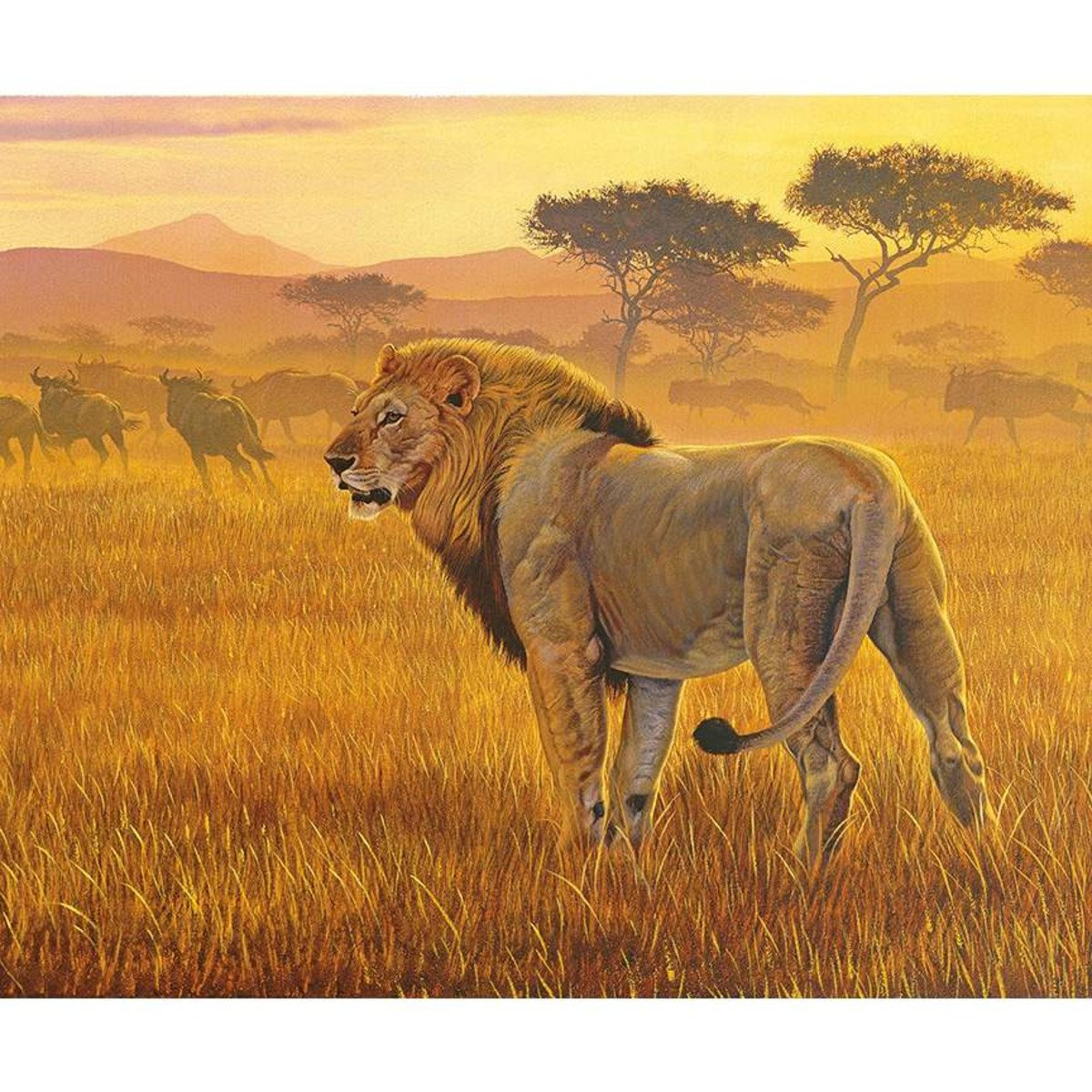 On Safari P10451 Lion Panel