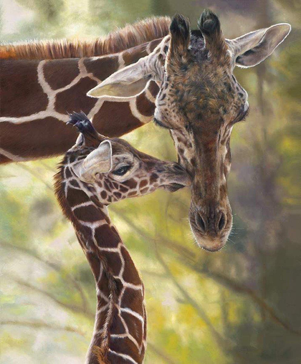 On Safari P10454 Giraffes Panel