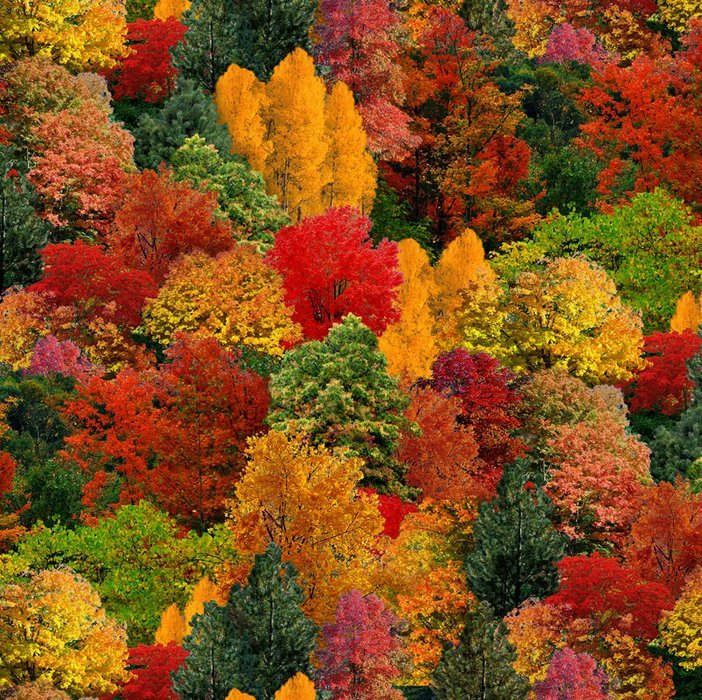 Landscape Medley 309 Multi Trees