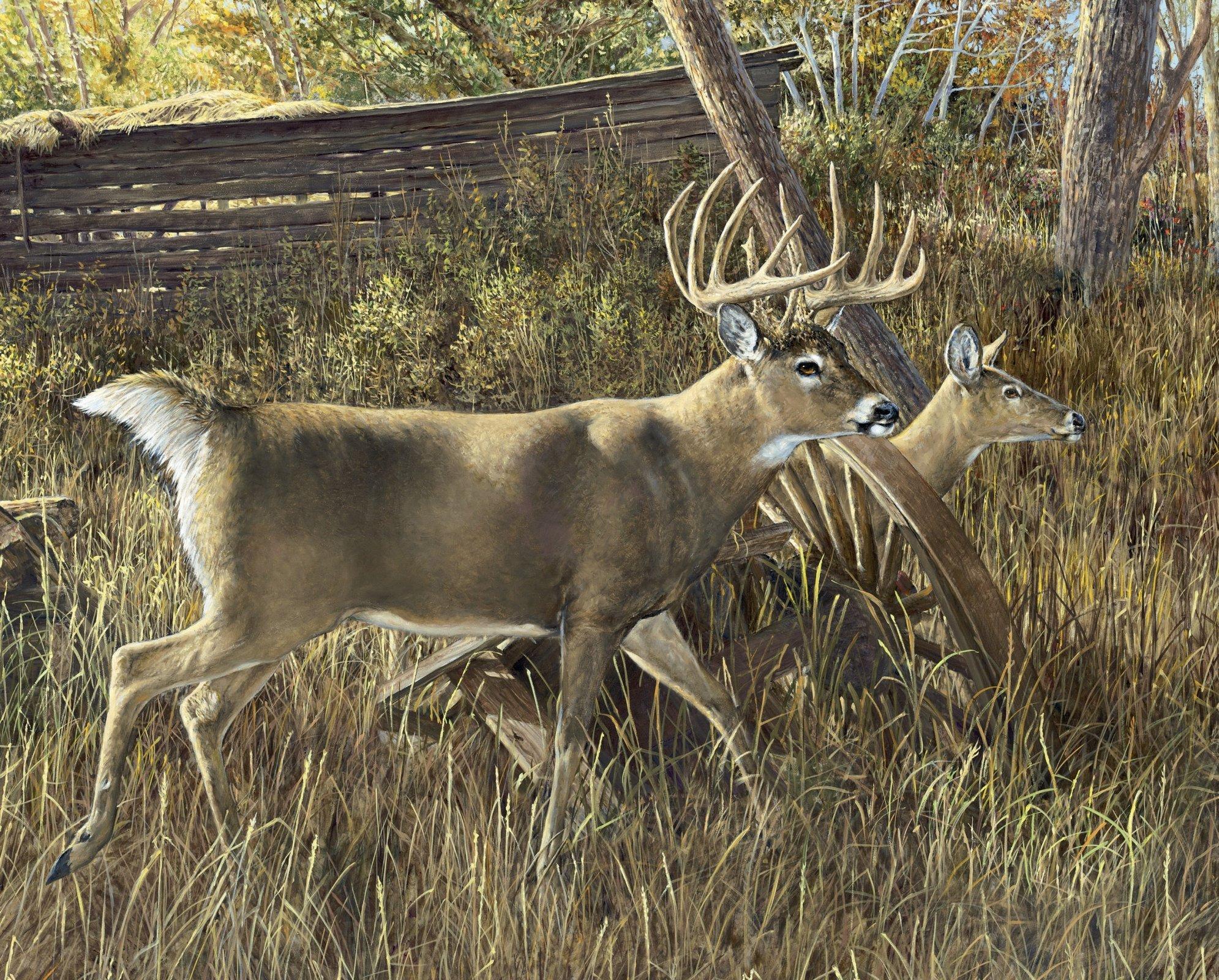 Walking Deer Couple 3132 Panel