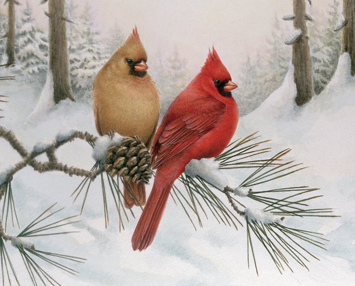Winter Cardinal Couple 3109 Panel